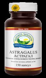 Astragalus (Астрагал)